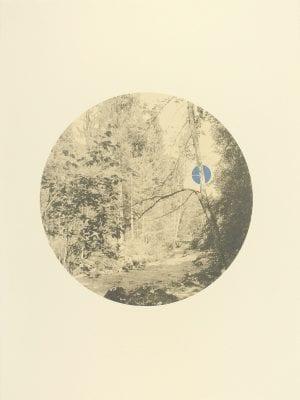 Moonlight Through The Trees_Sherrie-Leigh Jones_The Art Buyer Gallery